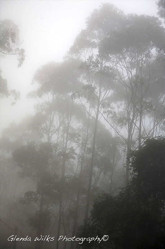 early morning fog on Mount Glorious